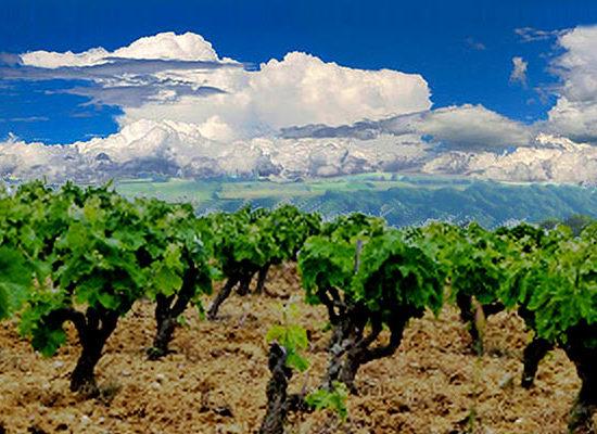 Vignoble du Haut-Poitou