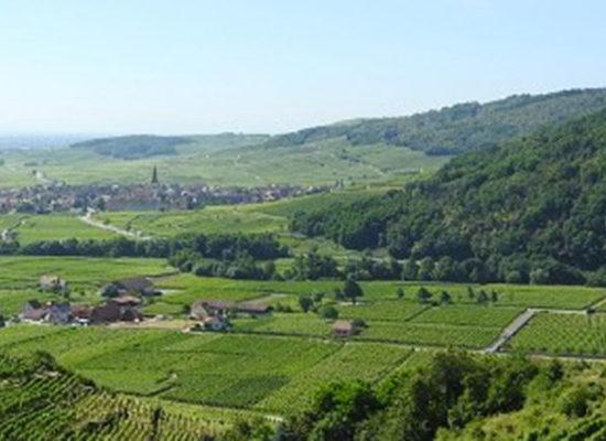 En Alsace, mais aussi en Bourgogne et Champagne, les AOC cherchent à limiter le plus strictement les plantations de vins sans IG. Mais l'administration met en avant le droit communautaire.