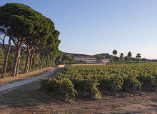 Vignes du Château du Galoupet